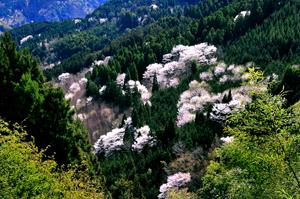 椎葉村の春