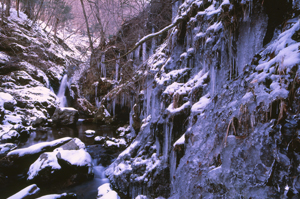 椎葉村の冬